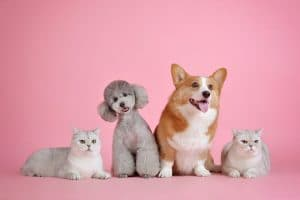 Cosmetic Surgery for Pets in NYC, NY