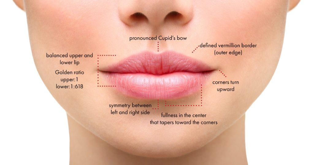 Medical Spa diagram for lip fillers in new york
